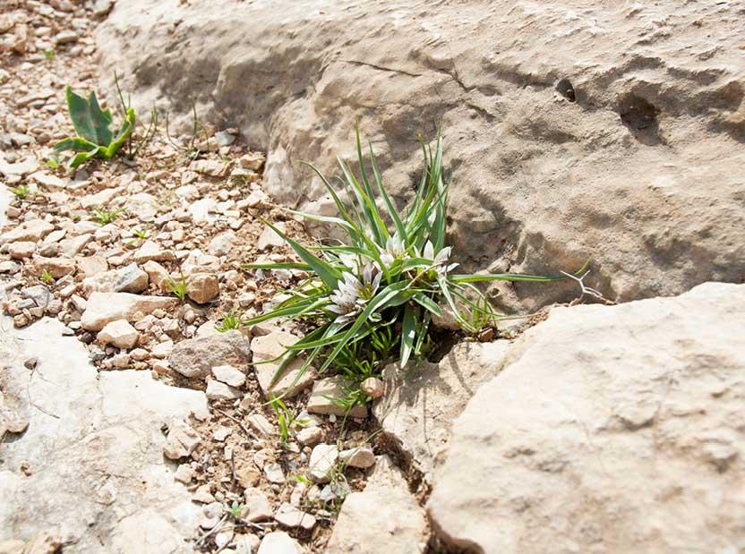 Desert plants along the way